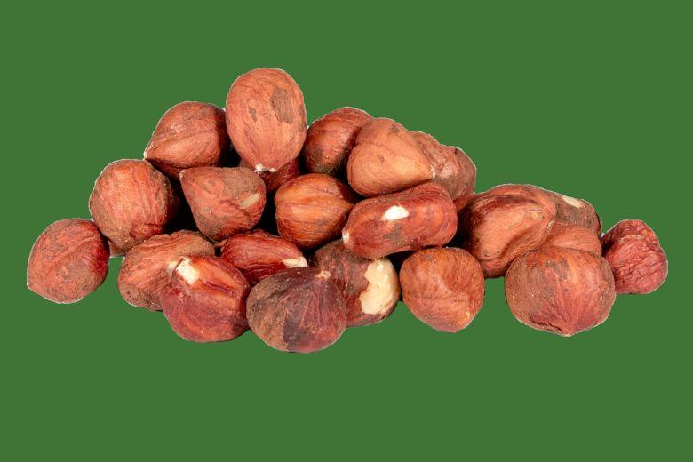 Barcelona Hazelnut Variety