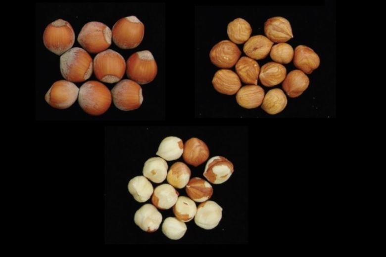 Ποικιλία Φουντουκιού Γιάμχιλ