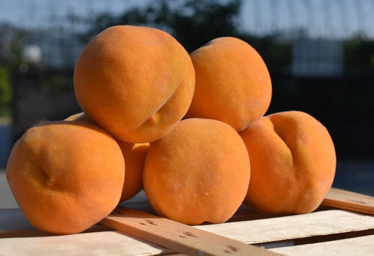 New Varieties of Industrial Peanut Peaches with Quality Characteristics