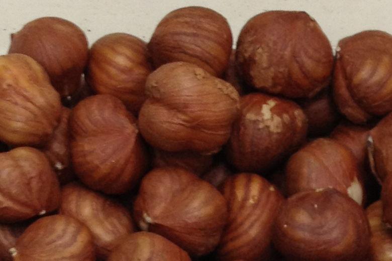Sakajawea Hazelnut Variety